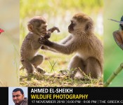 Nature and Wildlife Photography ( Ahmed ElSheikh )